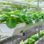 BIOECONOMY – FROM AN IDEA TO IMPLEMENTATION (SESSION I)